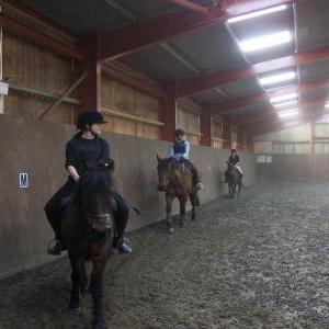 Group Horse Riding Lesson